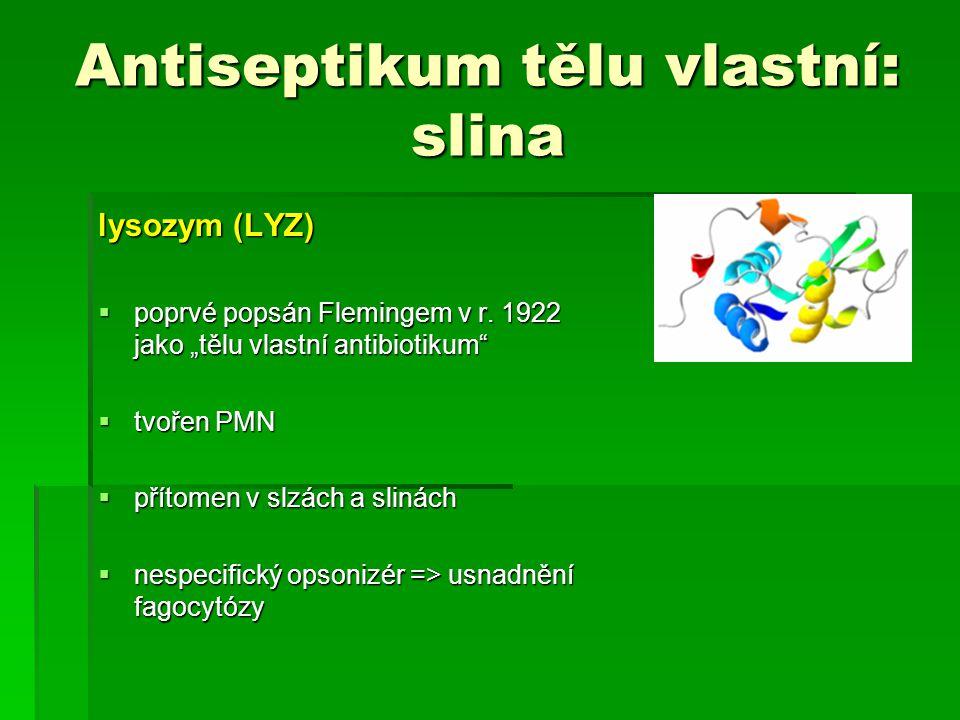 Antiseptikum tělu vlastní: slina