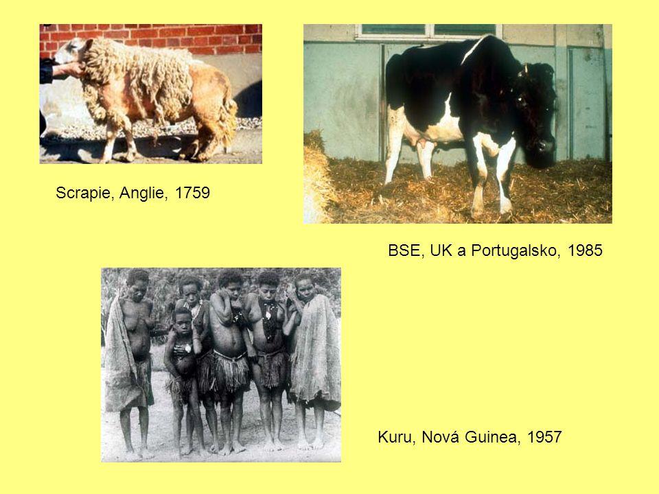 Scrapie, Anglie, 1759 BSE, UK a Portugalsko, 1985 Kuru, Nová Guinea, 1957