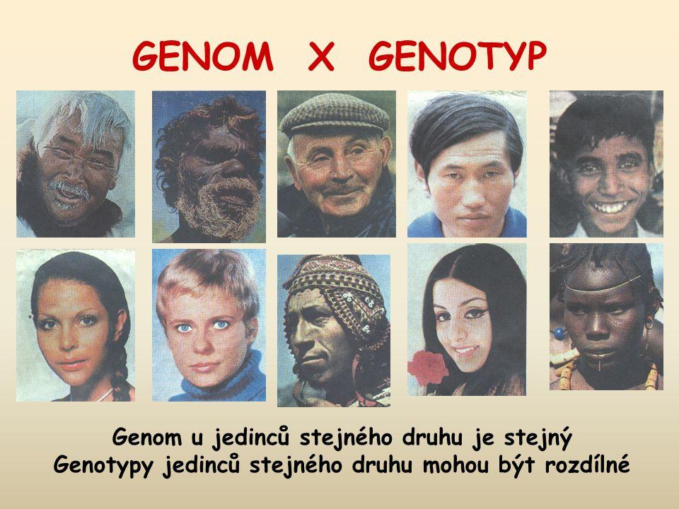 GENOM X GENOTYP Genom u jedinců stejného druhu je stejný