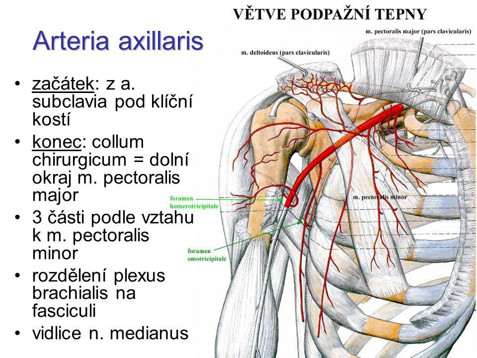 Arteria axillaris začátek: z a. subclavia pod klíční kostí