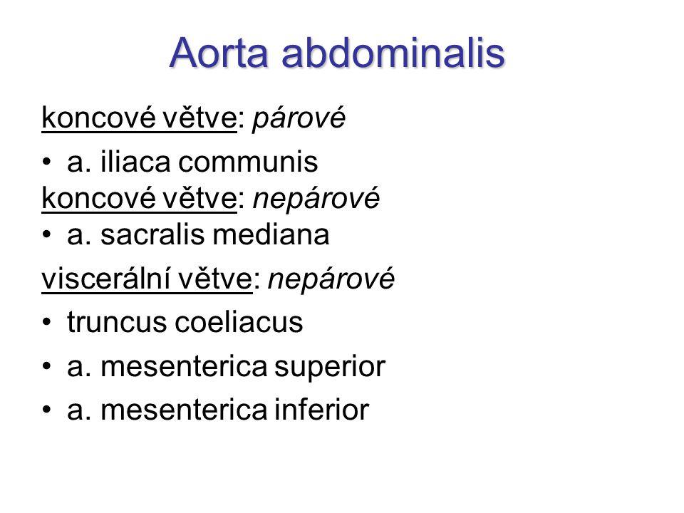 Aorta abdominalis koncové větve: párové a. iliaca communis