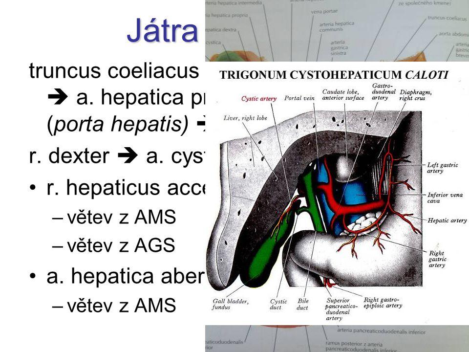 Játra a žlučník truncus coeliacus  a. hepatica communis  a. hepatica propria  r. dx.+ sin. (porta hepatis)  aa. interlobulares.
