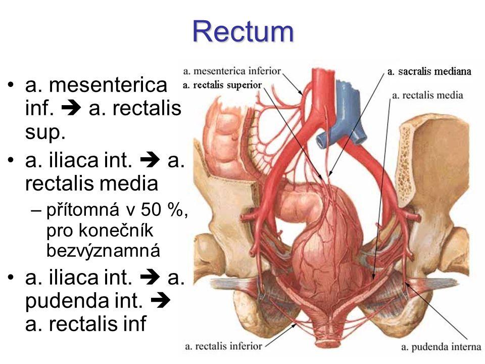Rectum a. mesenterica inf.  a. rectalis sup.