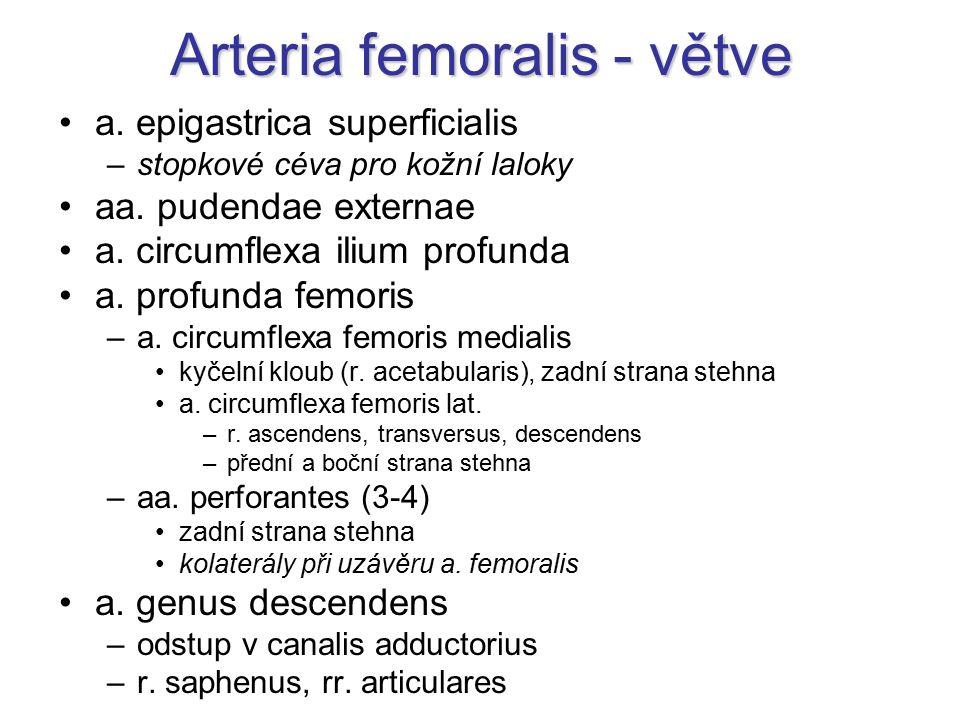 Arteria femoralis - větve