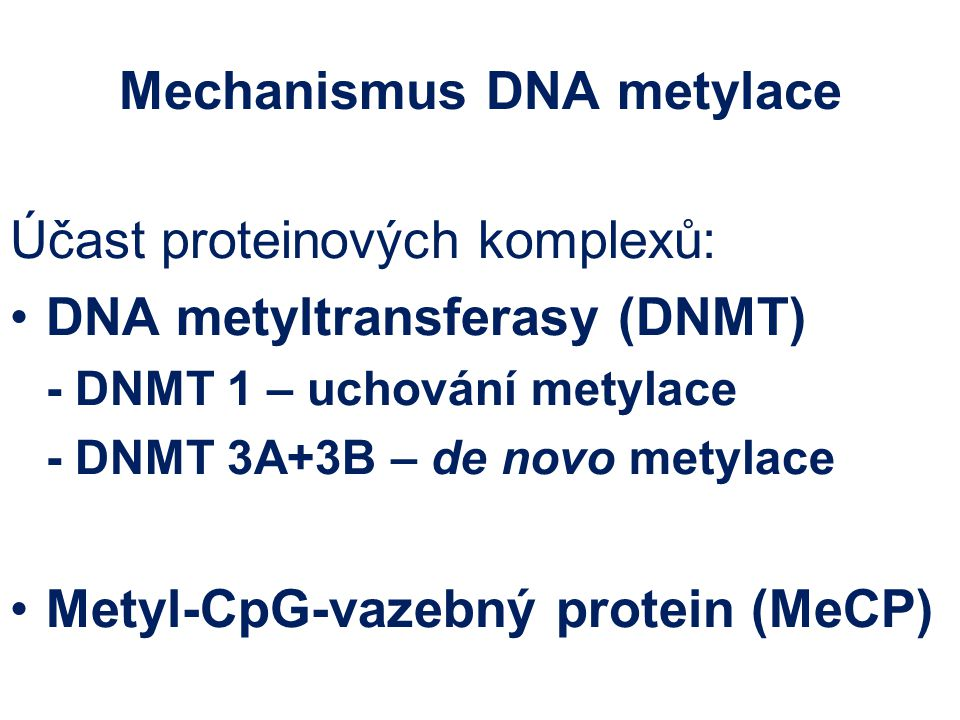 Mechanismus DNA metylace