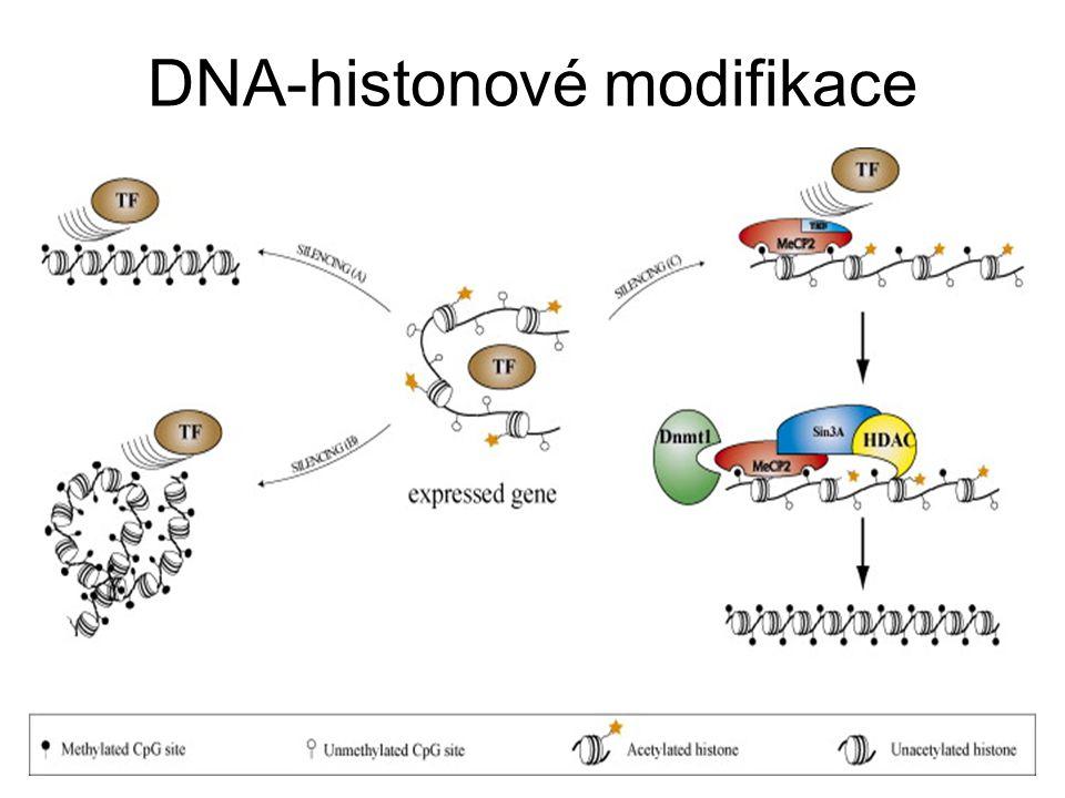 DNA-histonové modifikace