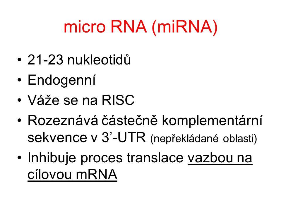 micro RNA (miRNA) 21-23 nukleotidů Endogenní Váže se na RISC