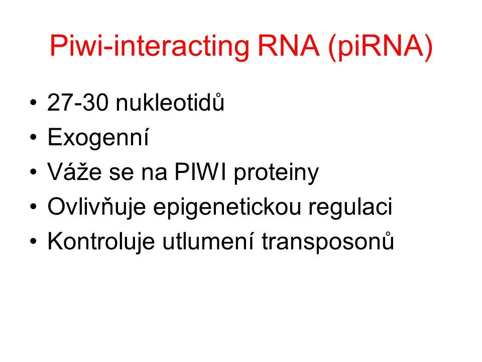 Piwi-interacting RNA (piRNA)