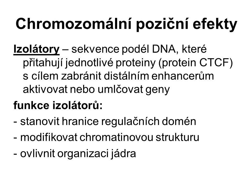 Chromozomální poziční efekty