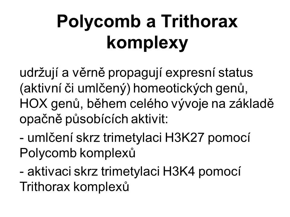 Polycomb a Trithorax komplexy