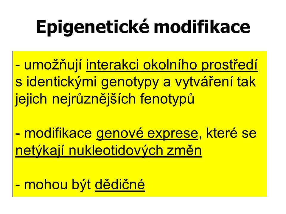 Epigenetické modifikace