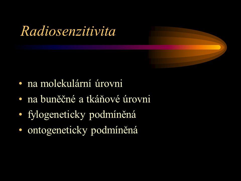 Radiosenzitivita na molekulární úrovni na buněčné a tkáňové úrovni