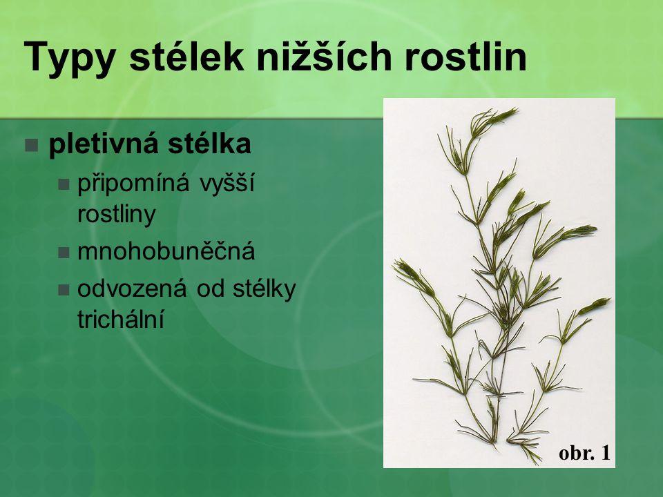 Typy stélek nižších rostlin