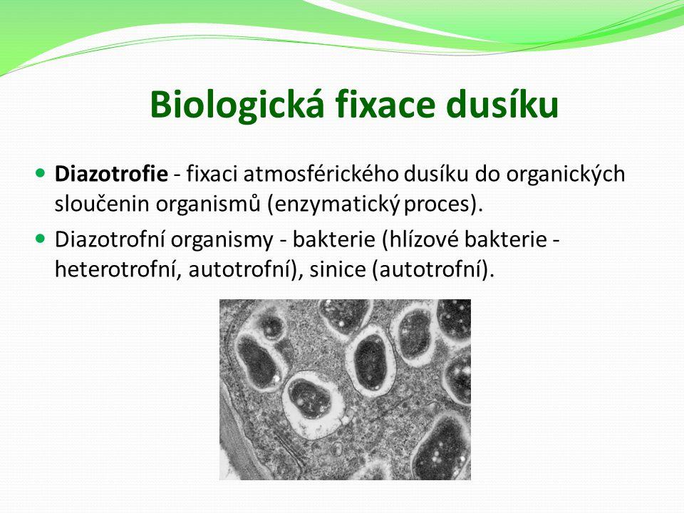 Biologická fixace dusíku