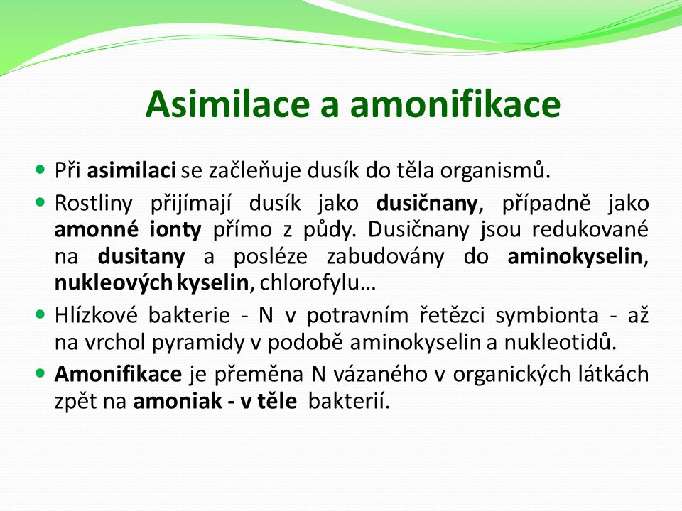 Asimilace a amonifikace