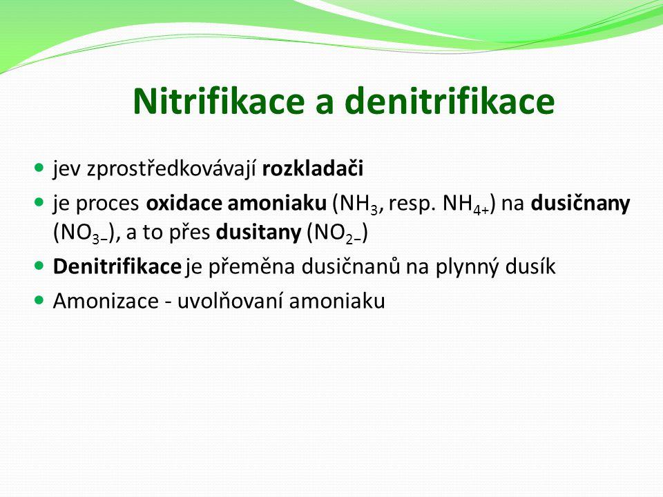 Nitrifikace a denitrifikace