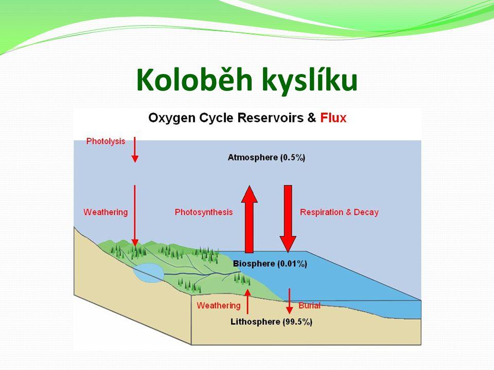 Koloběh kyslíku