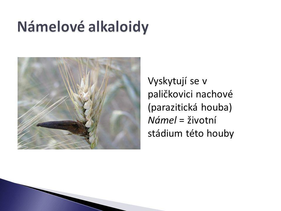 Námelové alkaloidy Vyskytují se v paličkovici nachové (parazitická houba) Námel = životní stádium této houby.