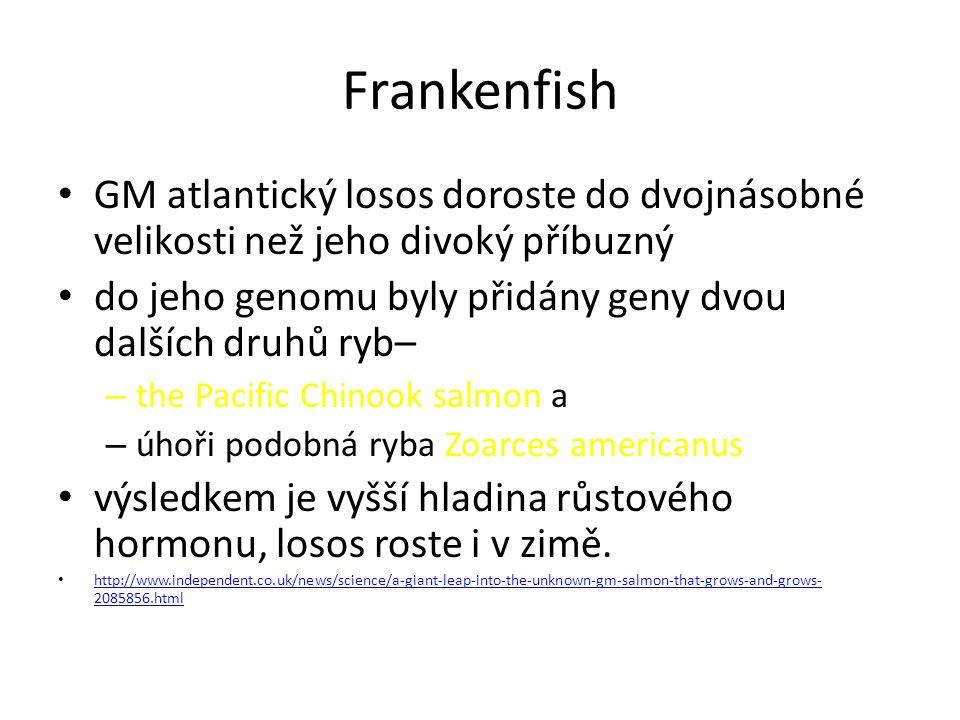 Frankenfish GM atlantický losos doroste do dvojnásobné velikosti než jeho divoký příbuzný. do jeho genomu byly přidány geny dvou dalších druhů ryb–