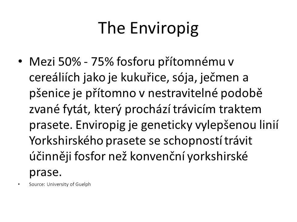 The Enviropig