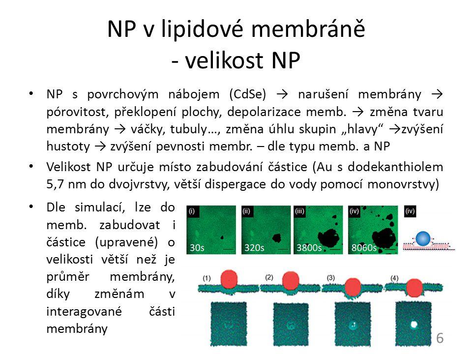 NP v lipidové membráně - velikost NP
