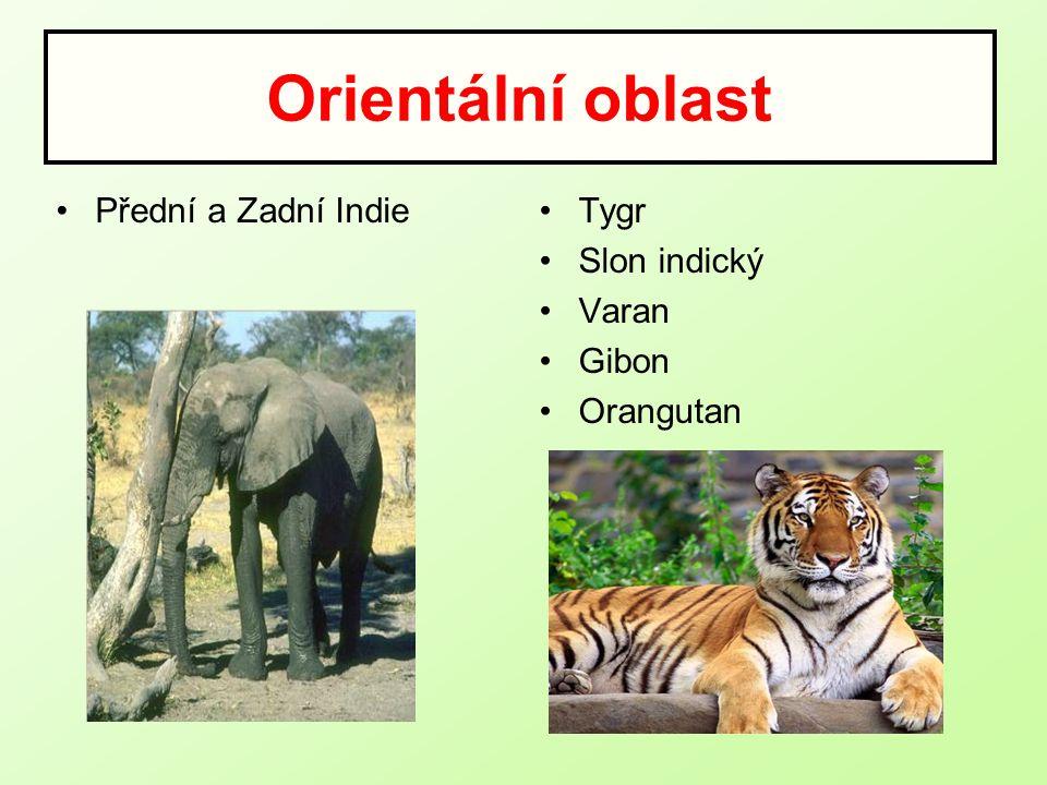 Orientální oblast Přední a Zadní Indie Tygr Slon indický Varan Gibon