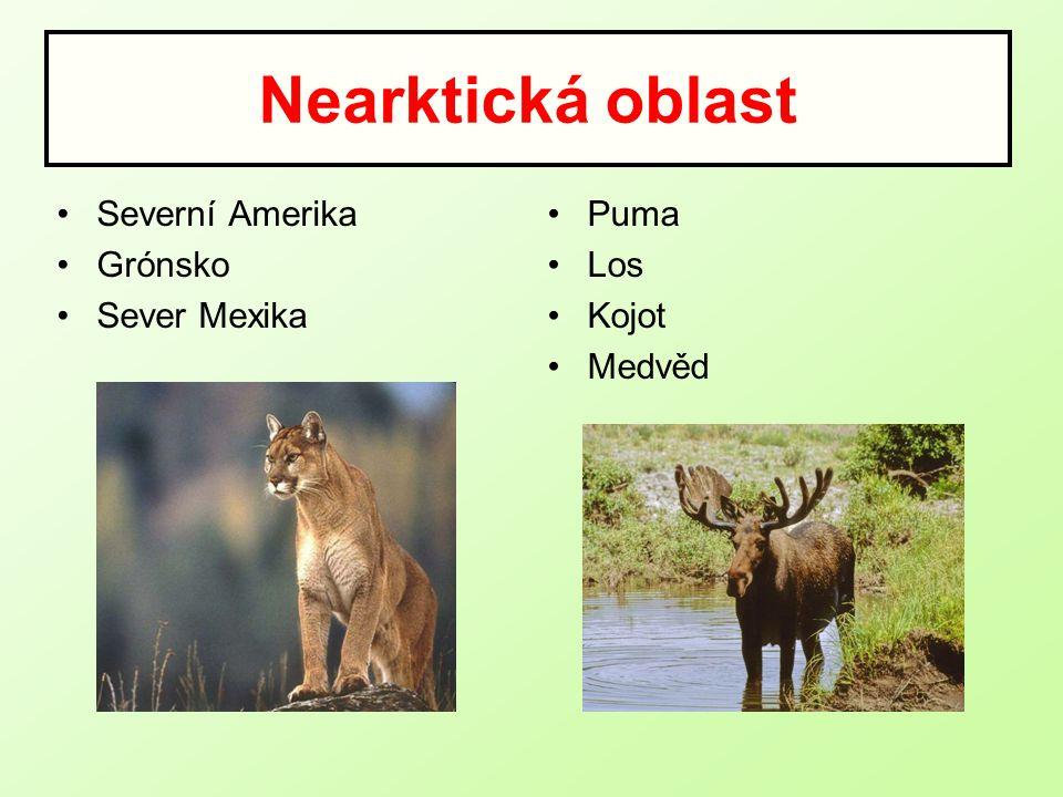Nearktická oblast Severní Amerika Grónsko Sever Mexika Puma Los Kojot