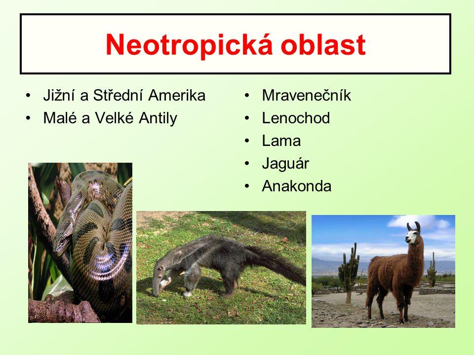 Neotropická oblast Jižní a Střední Amerika Malé a Velké Antily