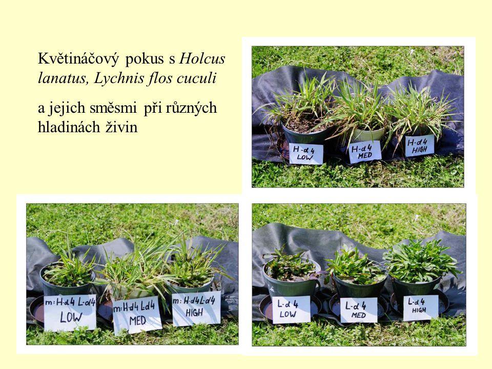 Květináčový pokus s Holcus lanatus, Lychnis flos cuculi