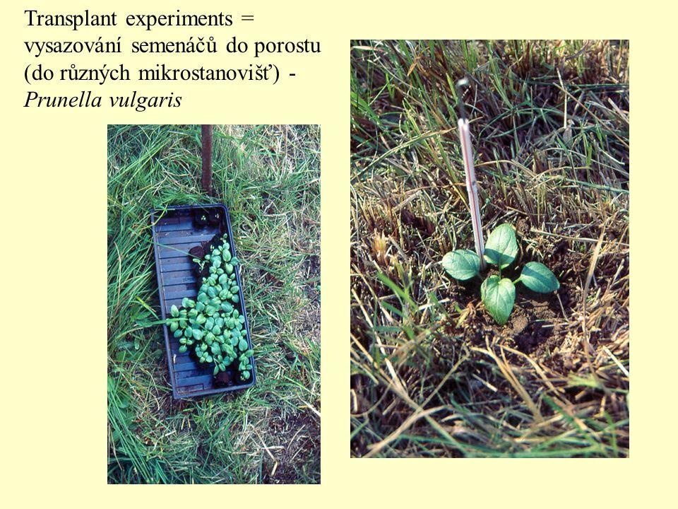 Transplant experiments = vysazování semenáčů do porostu (do různých mikrostanovišť) - Prunella vulgaris