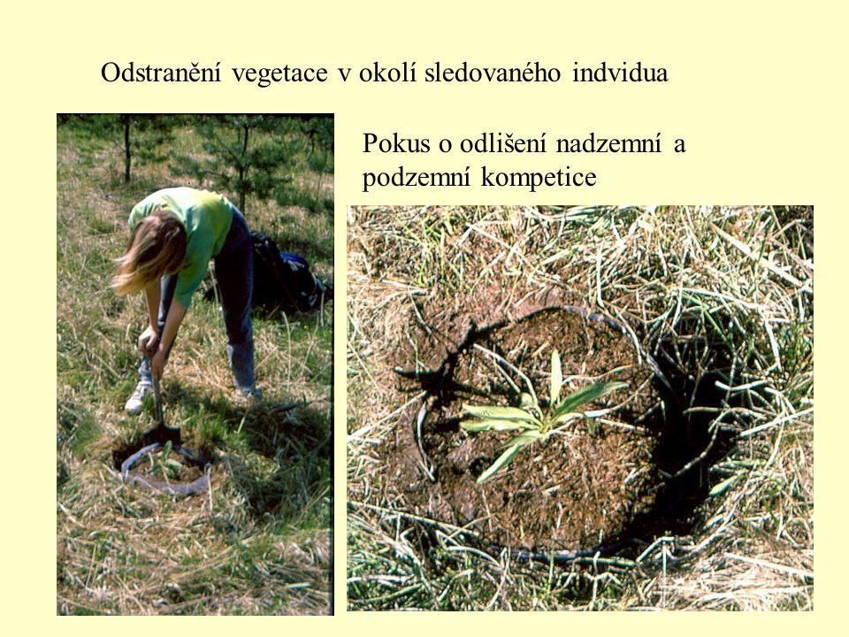 Odstranění vegetace v okolí sledovaného indvidua