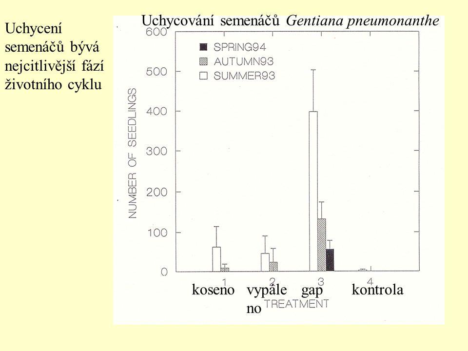 Uchycování semenáčů Gentiana pneumonanthe