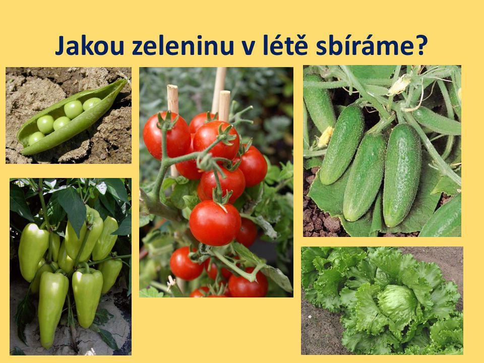 Jakou zeleninu v létě sbíráme