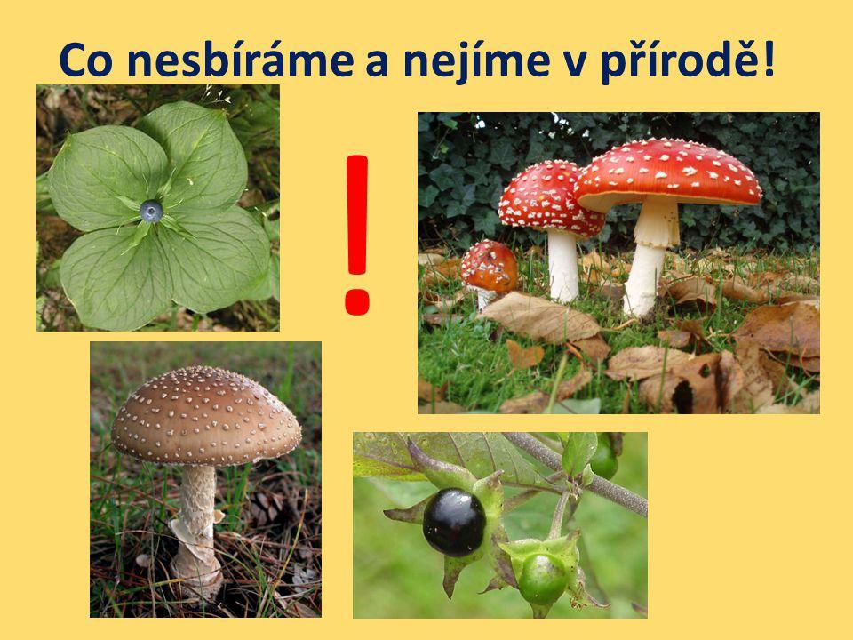 Co nesbíráme a nejíme v přírodě!