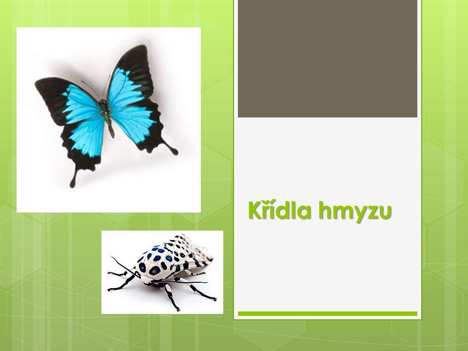Křídla hmyzu