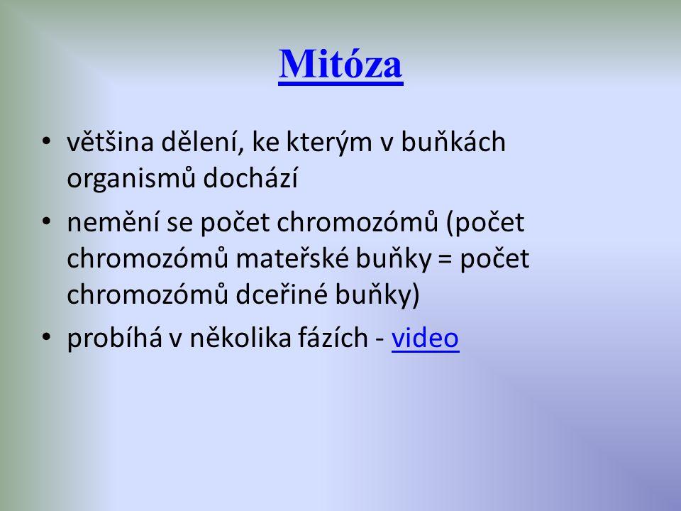 Mitóza většina dělení, ke kterým v buňkách organismů dochází