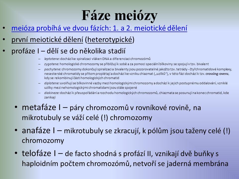 Fáze meiózy meióza probíhá ve dvou fázích: 1. a 2. meiotické dělení. první meiotické dělení (heterotypické)