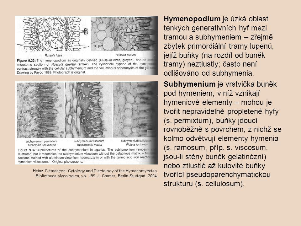 Hymenopodium je úzká oblast tenkých generativních hyf mezi tramou a subhymeniem – zřejmě zbytek primordiální tramy lupenů, jejíž buňky (na rozdíl od buněk tramy) neztlustly; často není odlišováno od subhymenia.
