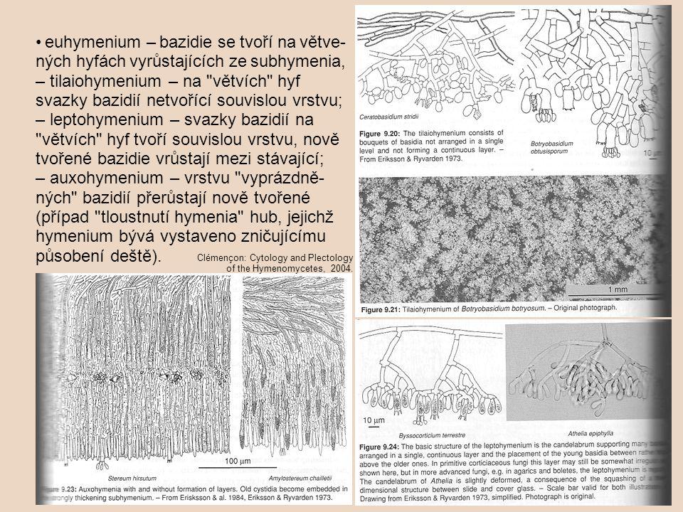 • euhymenium – bazidie se tvoří na větve-ných hyfách vyrůstajících ze subhymenia,