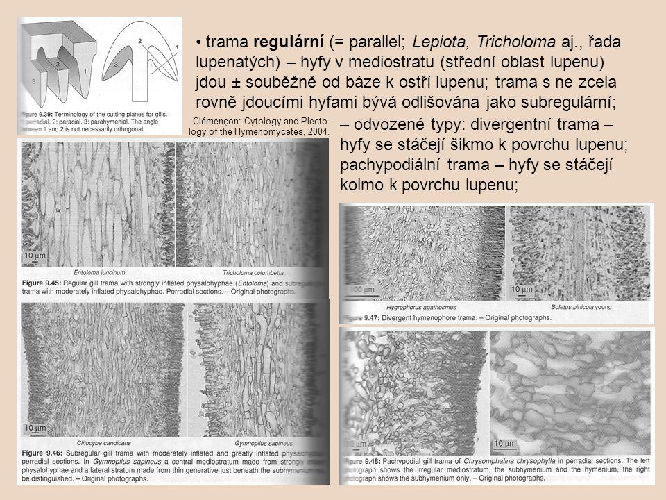 • trama regulární (= parallel; Lepiota, Tricholoma aj