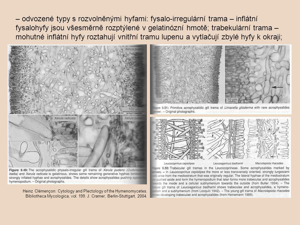 – odvozené typy s rozvolněnými hyfami: fysalo-irregulární trama – inflátní fysalohyfy jsou všesměrně rozptýlené v gelatinózní hmotě; trabekulární trama – mohutné inflátní hyfy roztahují vnitřní tramu lupenu a vytlačují zbylé hyfy k okraji;