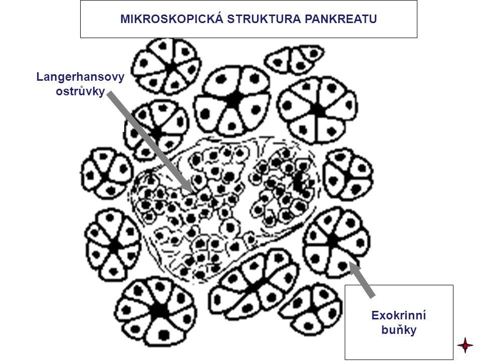 MIKROSKOPICKÁ STRUKTURA PANKREATU