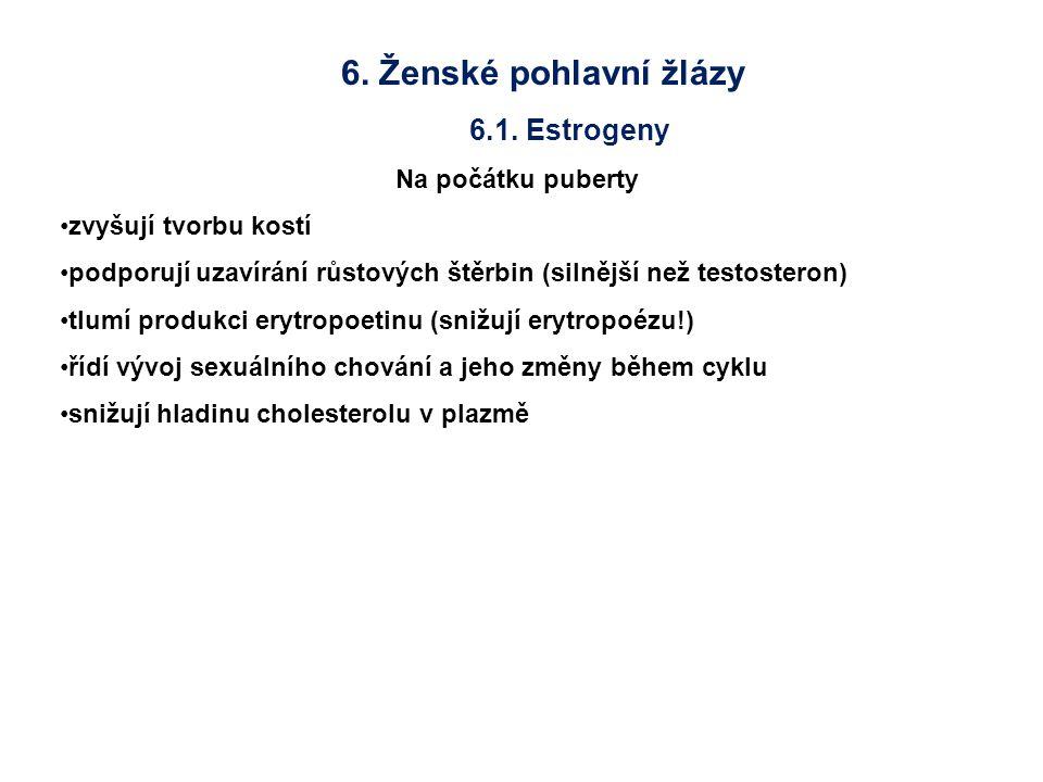 6. Ženské pohlavní žlázy 6.1. Estrogeny Na počátku puberty