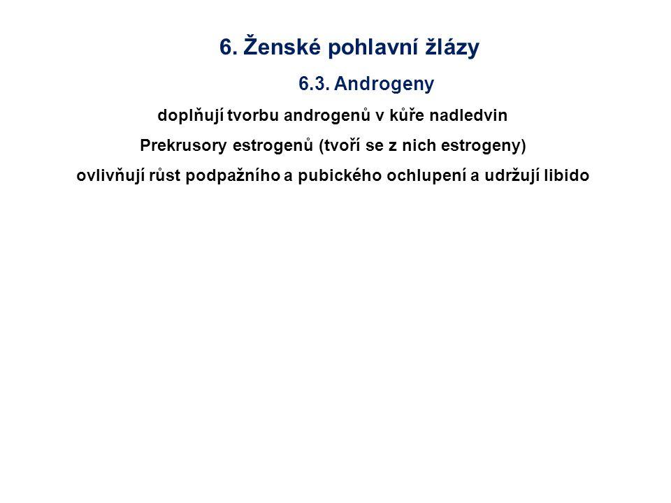 6. Ženské pohlavní žlázy 6.3. Androgeny