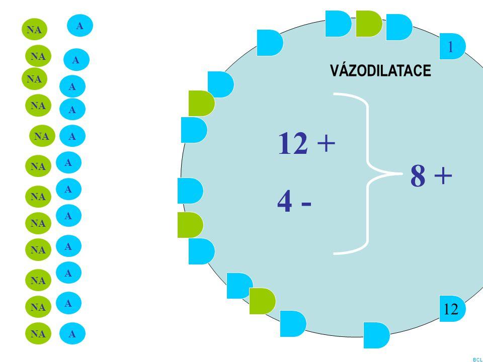 12 + 4 - 8 + 1 VÁZODILATACE 12 A NA NA A NA A NA A NA A A NA A NA A NA
