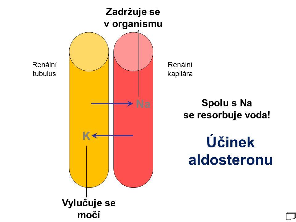 Účinek aldosteronu Na K Zadržuje se v organismu Spolu s Na
