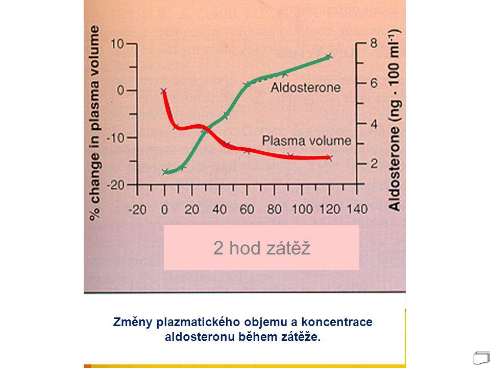 Změny plazmatického objemu a koncentrace aldosteronu během zátěže.