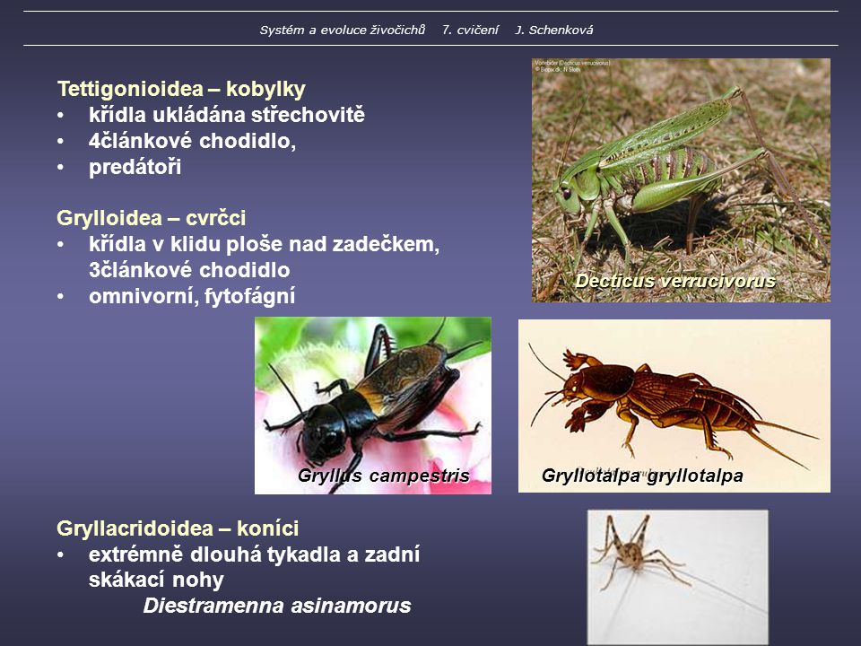 Systém a evoluce živočichů 7. cvičení J. Schenková