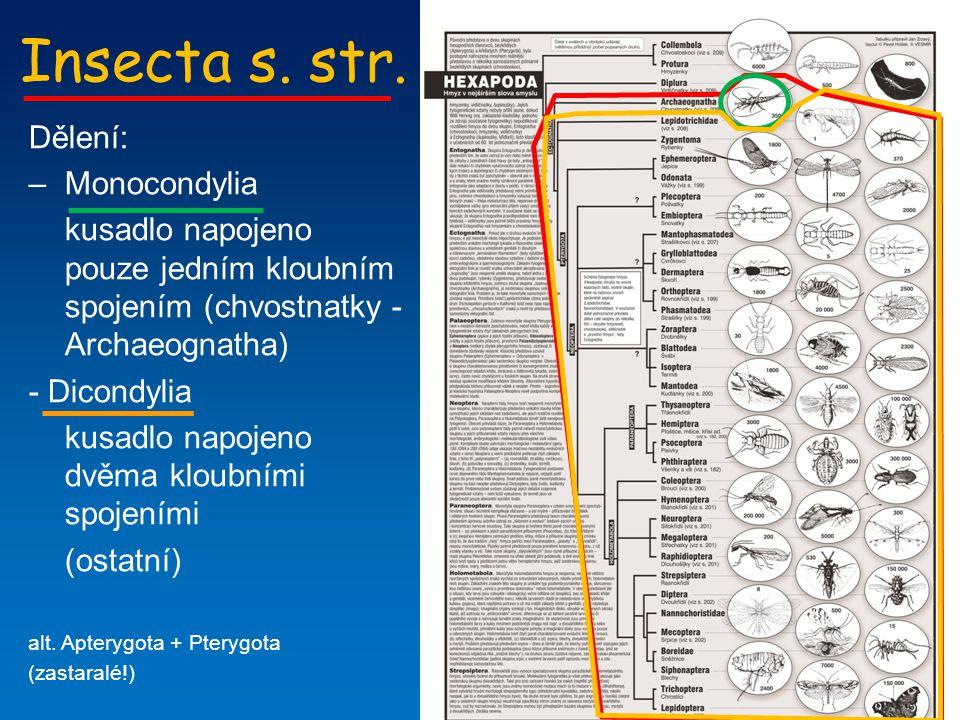 Insecta s. str. Dělení: Monocondylia
