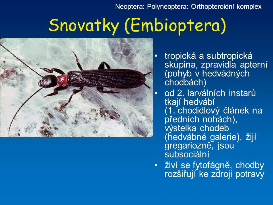 Snovatky (Embioptera)